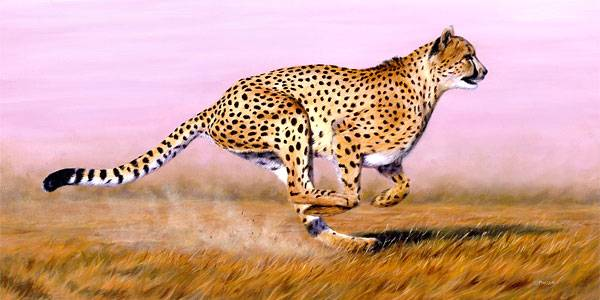fastest animal cheetah Top 10 Fastest Animals in the World.jpg