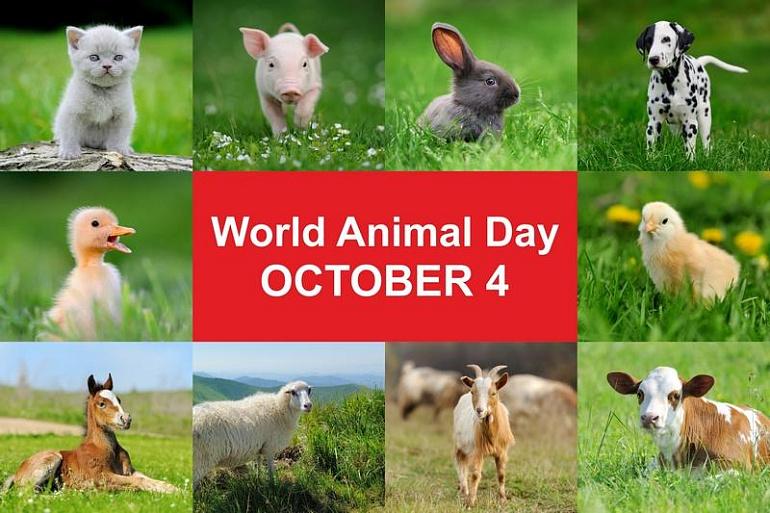 Всемирный день защиты животных: как начать помогать братьям меньшим?