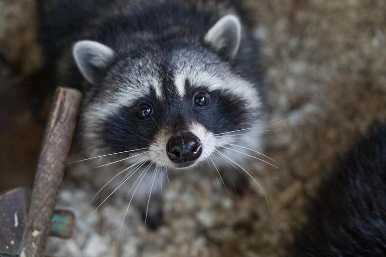 Зверушки – не игрушки: чем опасны контактные зоопарки